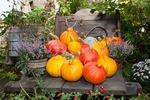 Herbstfest im Rittergut