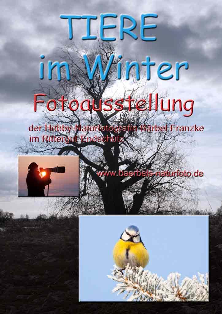 Tiere im Winter - 3.Ausstellung