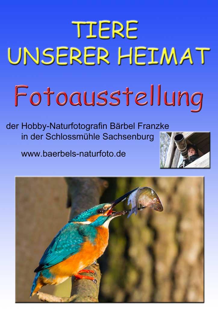 Flyer Sachsenburg